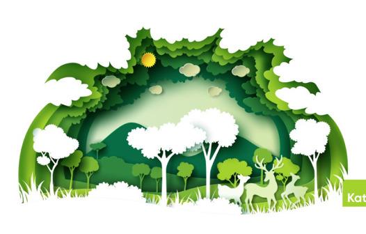 Sürdürülebilirlik ve Karbon Ayakizi